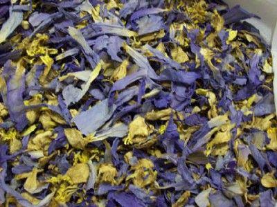 blue lotus tea flower Montreal